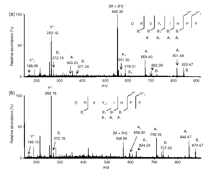 The MS spectra of nitrated angiotensin II peptides