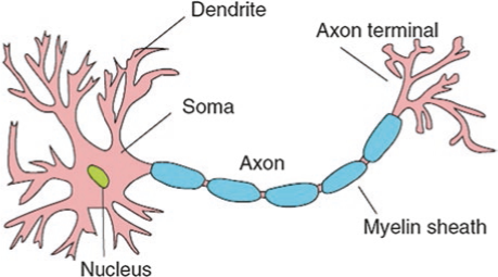 Features of a generalized neuron