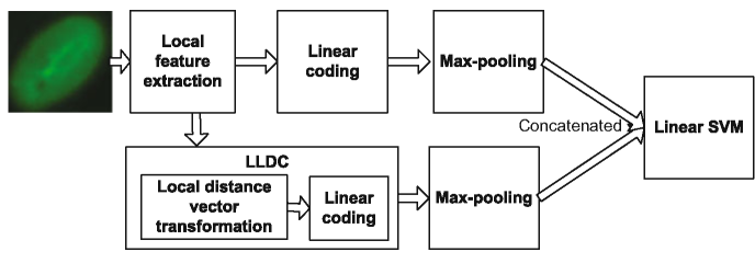 Overview of the image classification flowchart based on our proposed LLDC method